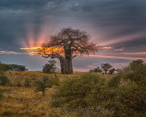 WINNER - CAT C - JACK COHEN - SUNSET IN TANZANIA